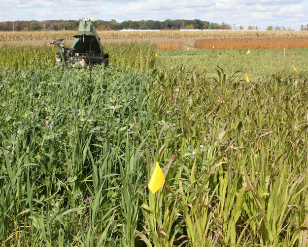 Oat-pea mix and sorghum-sudangrass cover crop plots