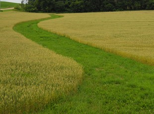Grassed waterways can help maintain soil quality and productivity