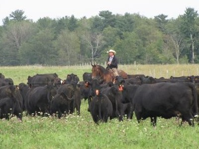 Do pasture management & nutrient management go hand in hand?