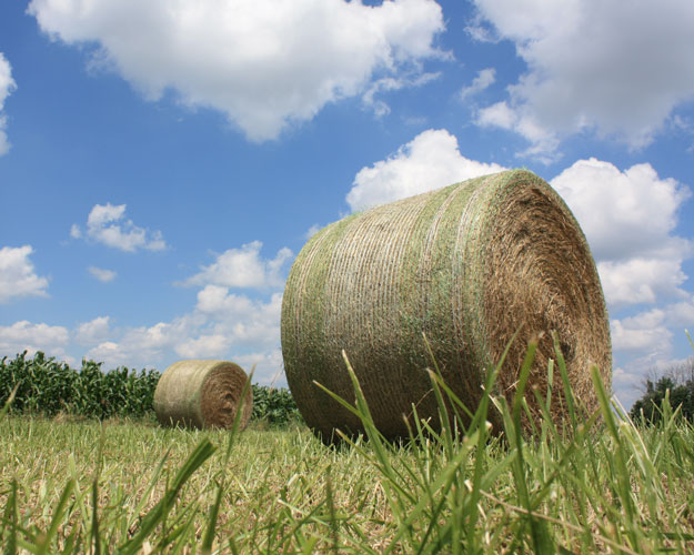 Jan 22 – hay supplies Lindquist Ag News article