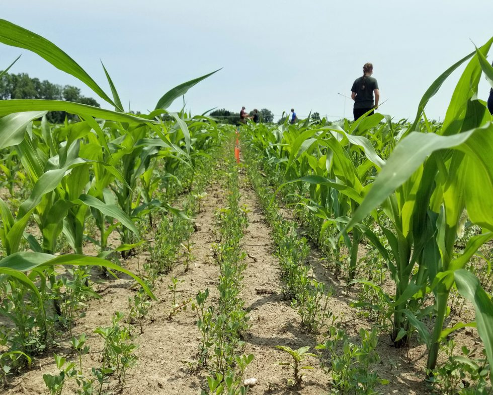 2019 Forage Research Field Day